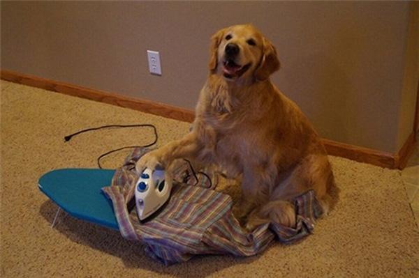 10. Thời đại nào mà chó có thể là cả quần áo cho người thế này nhỉ?