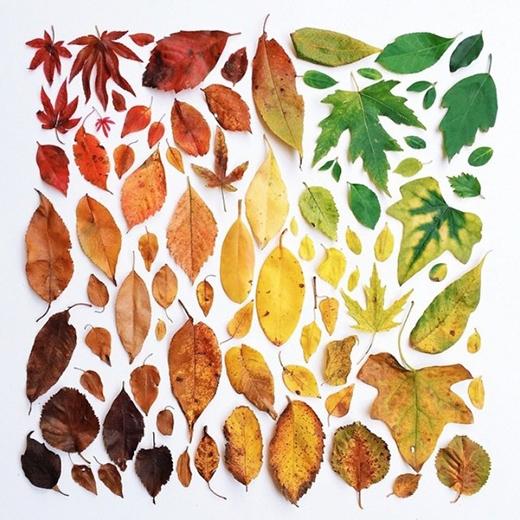 50 sắc thái của lá cây. (Ảnh: Internet)