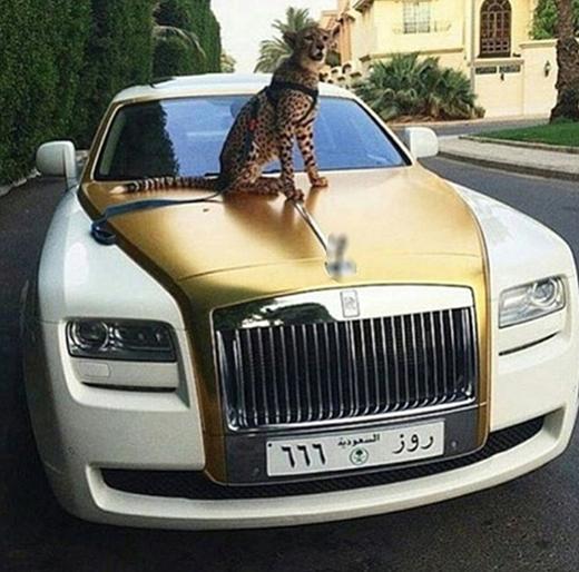 Cũng nuôi báo làm thú cưng, chạy xe hơi dát vàng. (Ảnh:Rich Parents ofInstagram)
