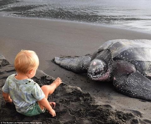 Hình ảnhDorothy đangxem rùa đẻ trứng được bố chụp lại. (Ảnh: Internet)