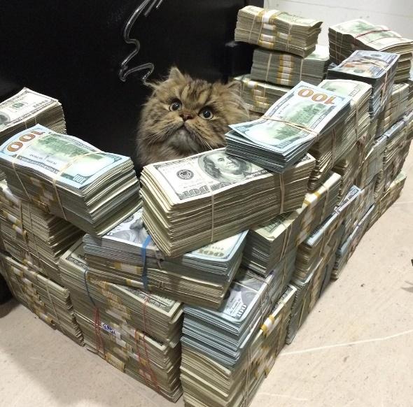 Tiền bạc xếp thành chồng chỉ để cho mèo nằm bên trong thì quả là kinh khủng rồi