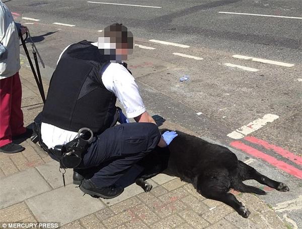"""Phát ngôn viên của RSPCA nói rằng: """"Chú chó đang không được khỏe và đã đến trạm thú y để kiểm tra. Sáng thứ Hai, chú chó đang trên đường về nhà từ trạm thú y. Đáng buồn thay, nhìn tình hình thì có vẻ như chú chó đã không chịu nổi, ngất xỉu rồi chết trên đường đi"""". (Ảnh: Internet)"""