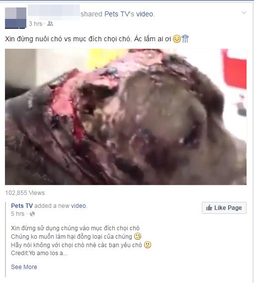 Cư dân mạng phẫn nộ với đoạn clip về một chú chó chọi đáng thương