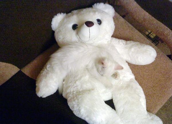 """Bạn có nhận ra """"vật thể lạ"""" ẩn giấu phía trên con gấu bông này không?"""