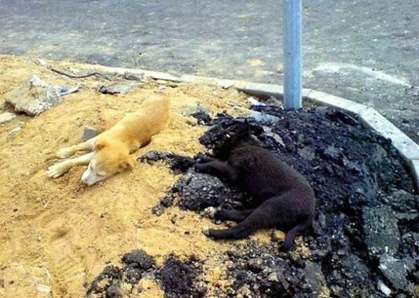 Không chỉ một, cả hai chú chó này đều đang muốn thử thách thị lực của bạn.