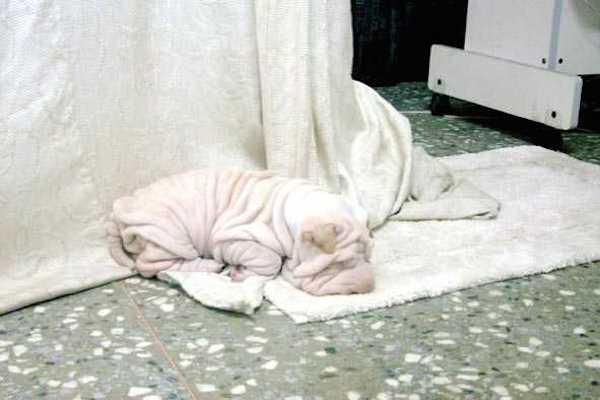 Đó không phải là khăn tắm đâu, đừng ném vào máy giặt nhé!