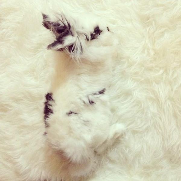 Nói thật đi, bạn phải dụi mắt bao nhiêu lần mới nhìn ra con vật nằm trên tấm chăn bông này?