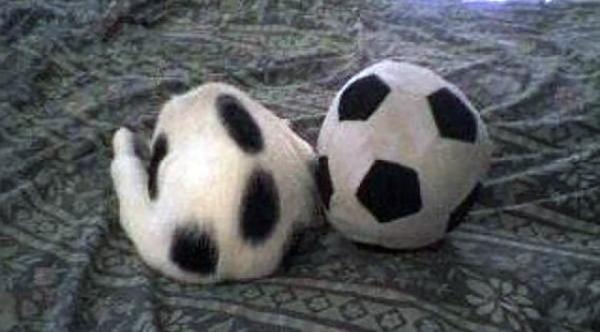 Đâu là quả bóng, đâu mới là mèo?