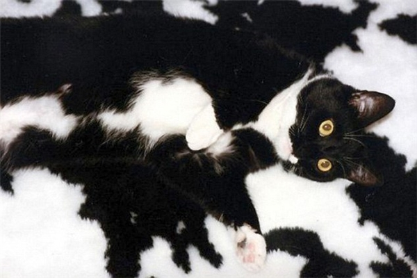 Nếu con mèo nhắm mắt lại thì bạn có thể nhìn ra được nó không?