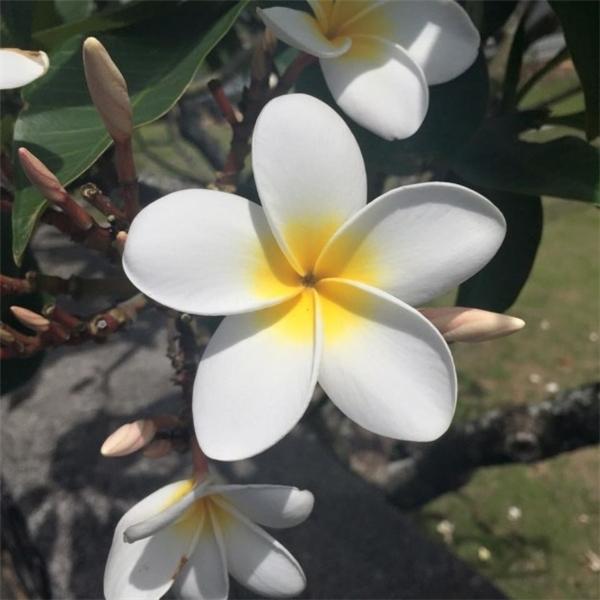"""6. Đây chính là lý do vì sao người ta thường nói """"Đẹp như hoa""""."""