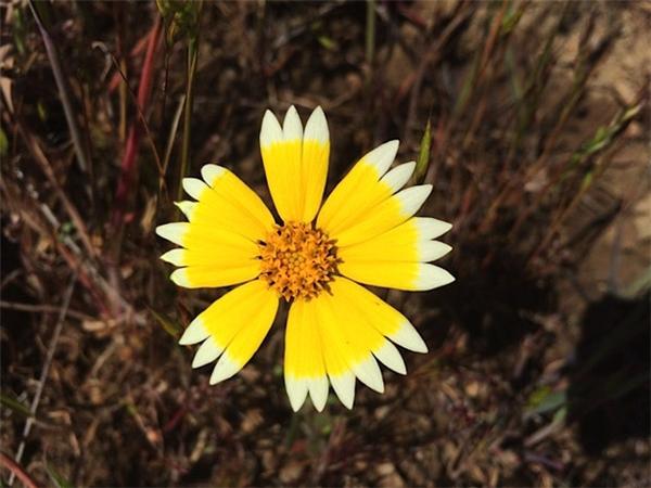 11. Không phải hoa hướng dương nhưng em vẫn toả sáng chói lói hơn cả mặt trời.