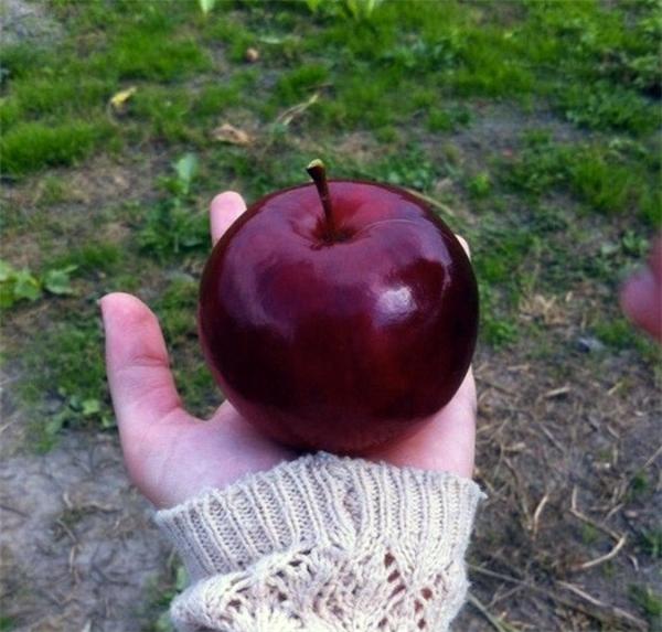15. Liệu đây có phải trái táo độc trong câu chuyện Bạch Tuyết không nhỉ?