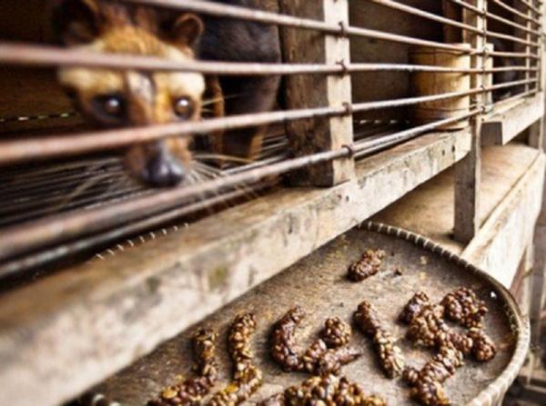 Cuộc sống của chúng gói gọn trong chu trình ăn rồi thải, thải rồi ăn.