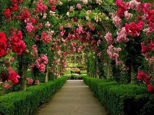 Bạn sẽ bị cuốn hút bởi rừng hoa ở đây. (Ảnh: Internet)