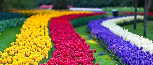 Tới đây, bạn sẽ ngập tràn cảm xúc trong rừng hoa tulip. (Ảnh: Internet)