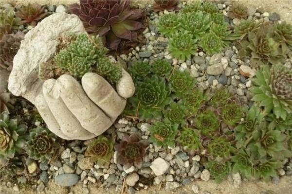Bái bai với các loại chậu cây cũ kĩnhàm chán, hãy thay đổi khu vườn nhà bạn với ý tưởng mới lạ này ngay thôi. (Ảnh: Internet)