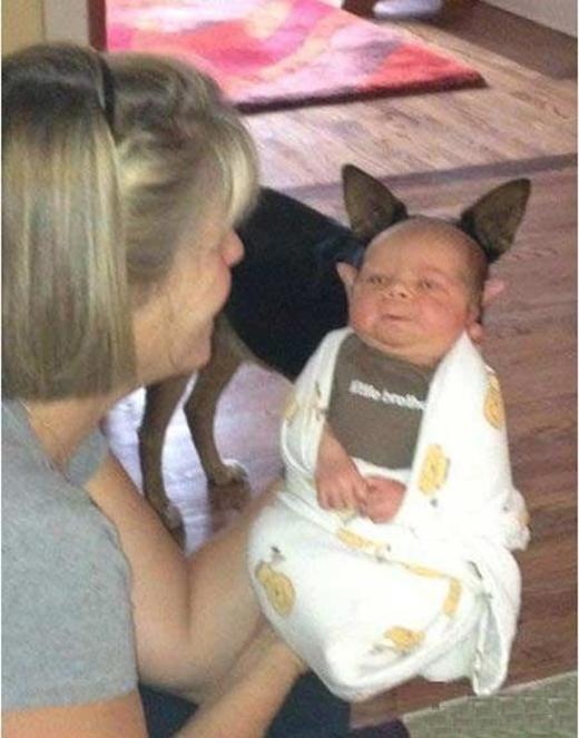 Người chó ra đời.(Ảnh: Reddit)