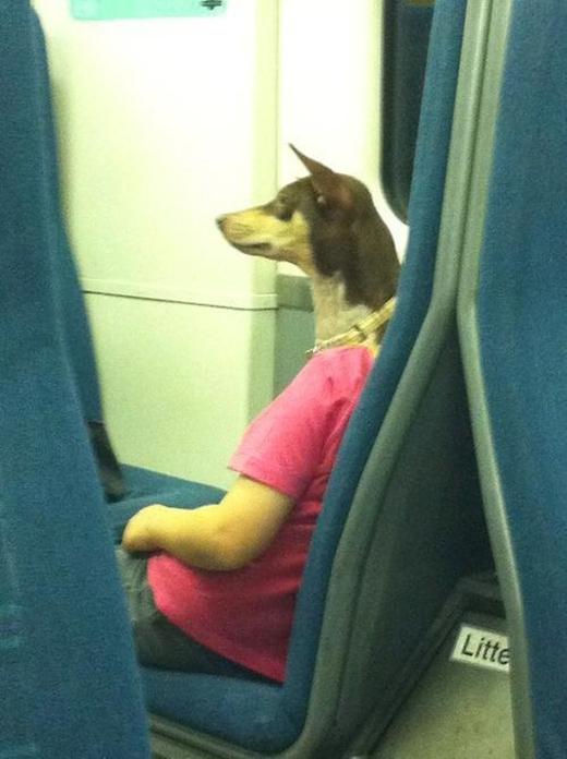 Người chó phiên bản trưởng thành.(Ảnh: Reddit)
