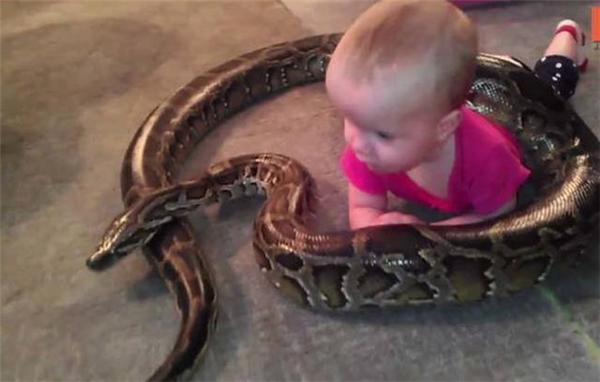Thú cưng của cô bé là một con trăn khổng lồ.