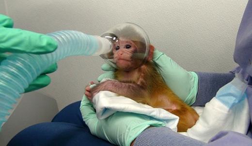 Nhờ thí nghiệm trên động vật đã giúp con người ngừa được nhiều bệnh. (Ảnh: Internet)