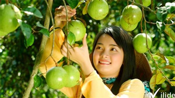 """Đến thăm miệt vườn Lái Thiêu, bạn sẽ tha hồ """"ngập ngụa"""" trong thế giới của nhiều loài trái cây nhiệt đới.(Ảnh: Internet)"""