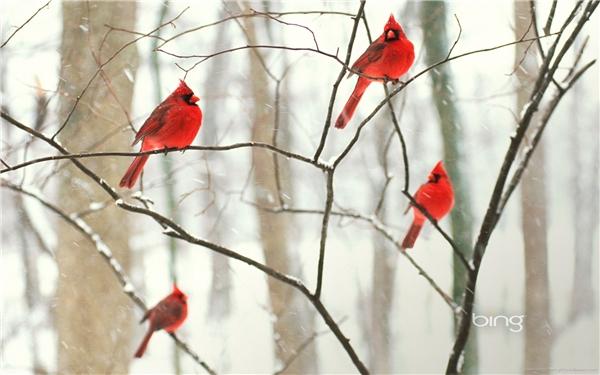 """Những nhà sản xuất """"Angry Birds"""" hẳn là lấy ý tưởng từ hình ảnh này chăng? (Ảnh: Bing)"""
