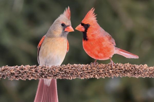 Một đôi chim thật hạnh phúc. (Ảnh: Bing)