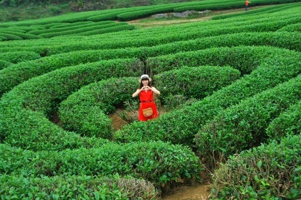 Du lịch Mộc Châu - Tất tần tật những điều bạn chưa biết về Mộc Châu