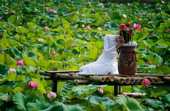Du lịch Hà Nội - Ngỡ ngàng trước những đầm sen đẹp như tranh ở Hà Nội