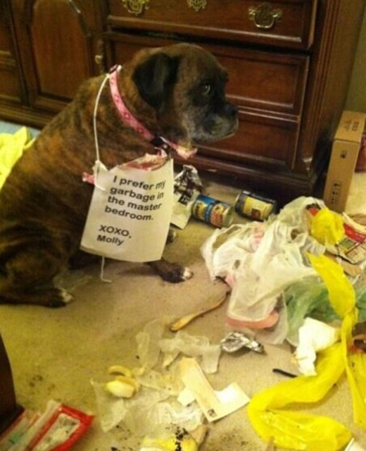 Hội thích sưu tập rác trong phòng. (Ảnh: Internet)