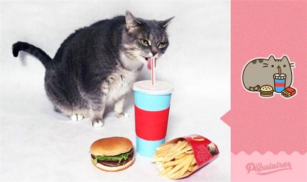 Niềm đam mê lớn nhất của chú mèo này chính là ăn uống. (Ảnh: Internet)