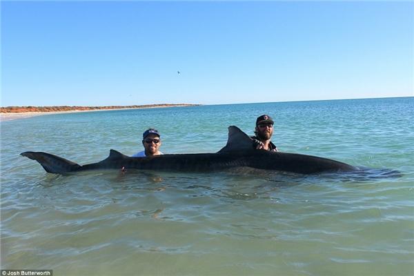 """Hai người đãra tận khơi xa câu cá mập phục vụ cho nhu cầu """"tự sướng""""."""