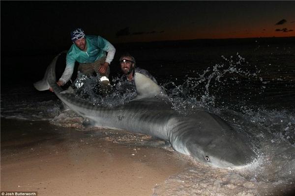 Chú cá mậpkhông ngừng giãy giụa cố thoát khỏi bàn tay ngư dân.