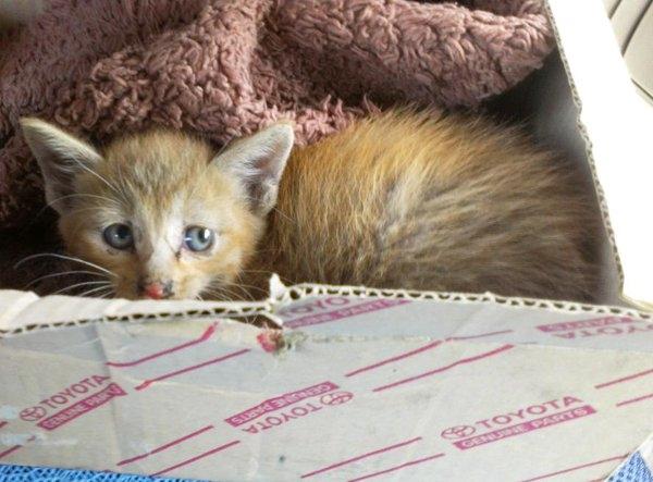 Em mèo nhỏ 2 năm trước bị người ta bỏ rơi ngoài đường...