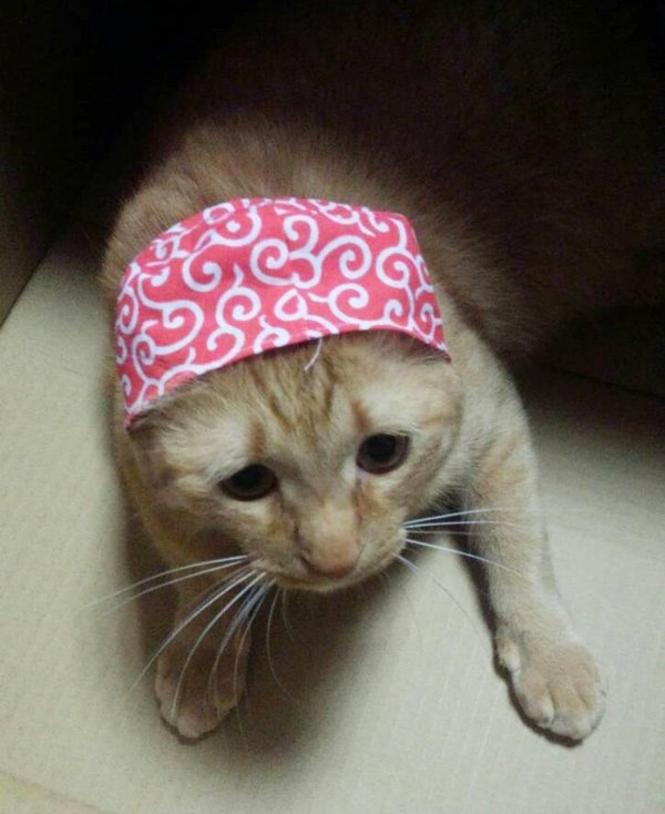 Phát sốt chú mèo có vẻ mặt tội nhất thế kỷ trong mọi tình huống