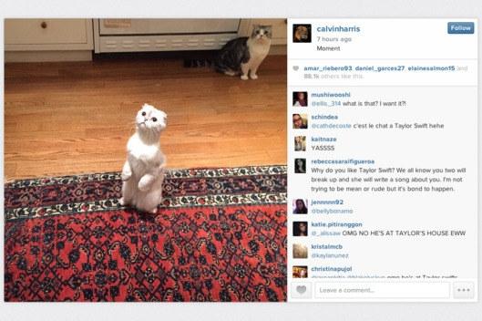 """Đến cả lũ mèo cưng đáng yêu của Taylor cũng được """"tống tiễn"""" theo cô chủ xinh đẹp của chúng."""