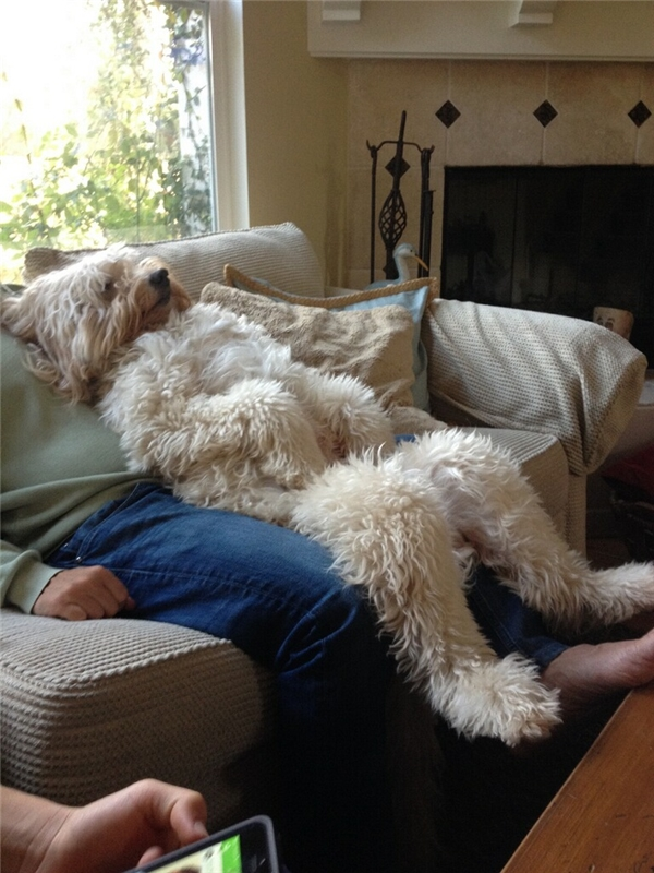 Hai bố con nó có thể nằm đó xem TV suốt cả ngày cũng được.