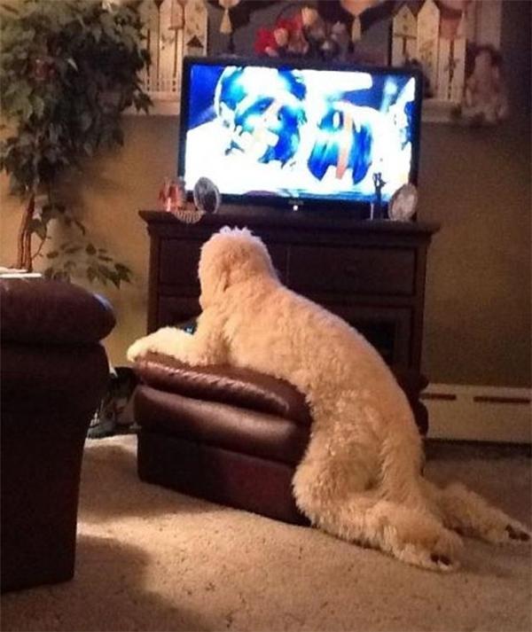 Cái thằng lớn xác rồi mà còn lười biếng, ăn xong rồi chỉ biết nằm ườn ra đócoi TV.
