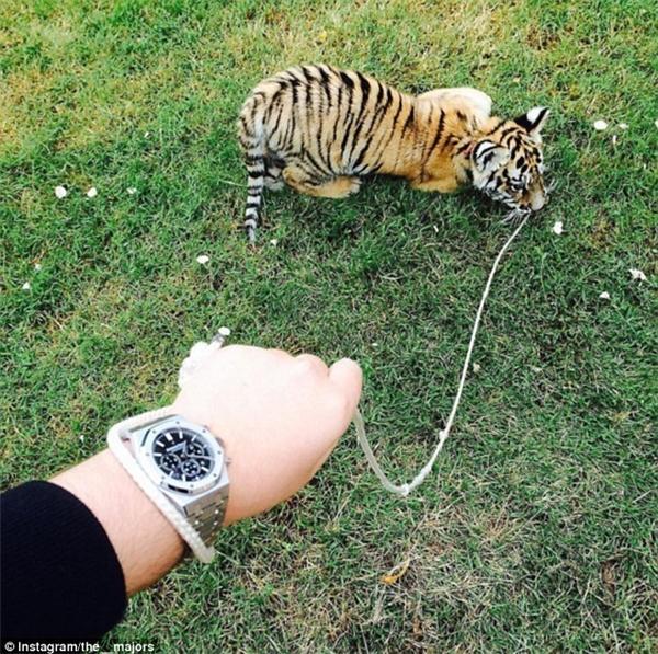 Tuy nhiên đôi lúc các đại gia cũng không quên vừa khoe thú cưng vừa khoe đồng hồ hiệu.