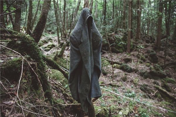 Rừng tự tử Aokigahara ở Nhật Bản.(Ảnh: Internet)