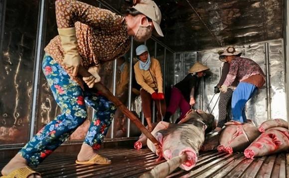 Cực nhọc và hiểm nguy luôn cận kề các phu nữ bốc vác cá ở Hòn Rớ