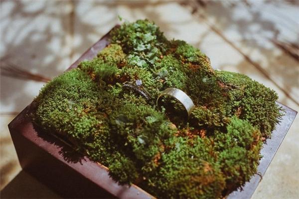 Nhẫn cưới vô cùng cá tính trong chậu cây gỗ.