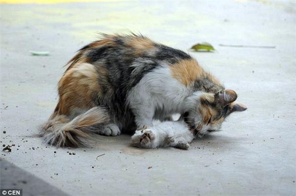 mèo con bị giết