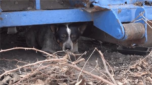 Tội nghiệp chú chó sống dưới gầm xe rác gần một năm ròng