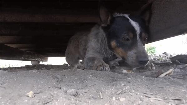 Chú chó khốn khổ không gia đình sống dưới gầm xe rác