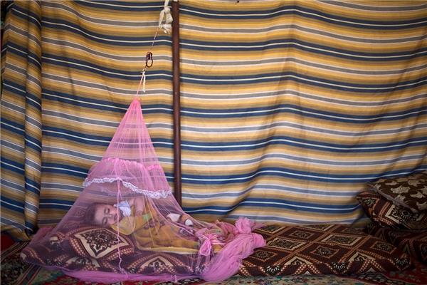 Mariam Mohammed, bé trai 7 tháng tuổi tới từ Hama, Syria, nằm ngủ trong chiếc màn chống muỗi ở thung lũng Jordan, Jordan. Gia đình Mohammed và nhiều người khác đang sống cảnh vạ vật trong khu lều tạm.