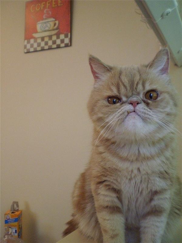 Nhiều người lo lắng nếu không còn chiếc răng hô liệu chú mèo có còn biểu cảmbá đạo như trước nữa hay không.