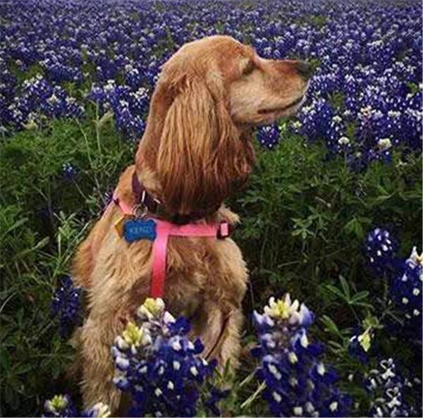 Nhưng hiện tại đã trở thành một nàng tiểu thư chó xinh đẹp rồi. Thần kì quá phải không? (Ảnh: Internet)