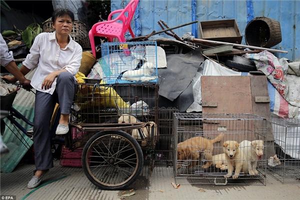 """Theo thống kê của tổ chức nói trên, hàng năm có hơn 10 triệu chú chó, mèo bị """"thịt"""" tại Trung Quốc. Chỉ riêng thành phố Ngọc Lâm, mỗi ngày sẽ có khoảng 300 con cả chó lẫn mèobị làm thịt.(Ảnh: EPA)"""