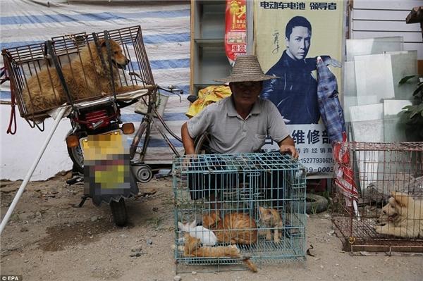 """Chia sẻ với trang Dailymail, bà Jill Robinson – giám đốc Tổ chức Động vật châu Á, nói: """"Lễ hội nàyrất kinh khủng, tuy nhiên, vấn đề chính yếu ở đây lại vượt xa cả lễ hội. Việc chấm dứt lễ hội thịt chó Ngọc Lâmchỉ là bước đầu tiên thúc đẩy chuyện cấm tiêu thụ thịt chó, mèo ở Trung Quốc"""".(Ảnh: EPA)"""